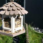 Gartenprojekt für Kinder: Was machen Vögel im Winter?